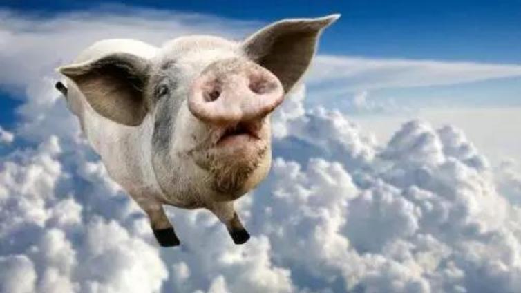 非洲猪瘟蒸发500亿市值,到底怎么了?